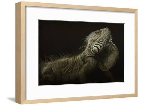 Iguana Profile-Aleksandar Milosavljevic-Framed Art Print