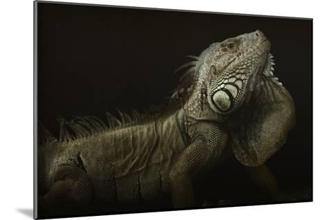Iguana Profile-Aleksandar Milosavljevic-Mounted Giclee Print