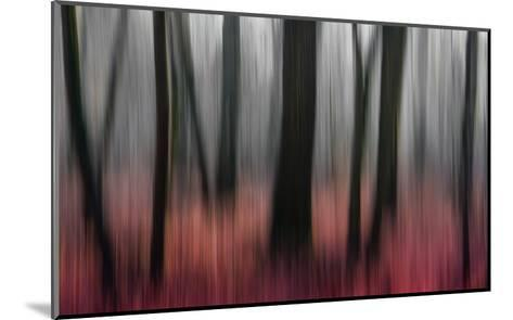 Red Wood-Gilbert Claes-Mounted Giclee Print