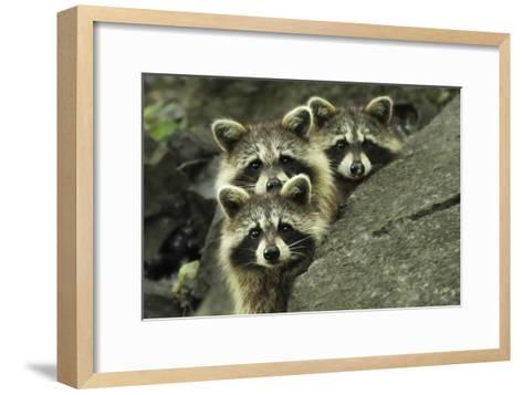 Tres Banditos-Mircea Costina-Framed Art Print