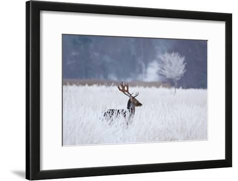 Fallow Deer In The Frozen Winter Landscape-Allan Wallberg-Framed Art Print