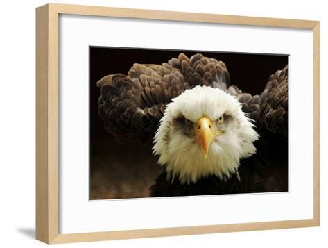 The Judge-Tim Kirwan-Framed Art Print