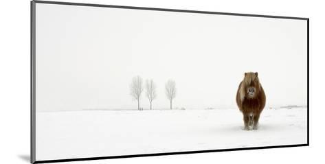 The Cold Pony-Gert Van Den-Mounted Giclee Print