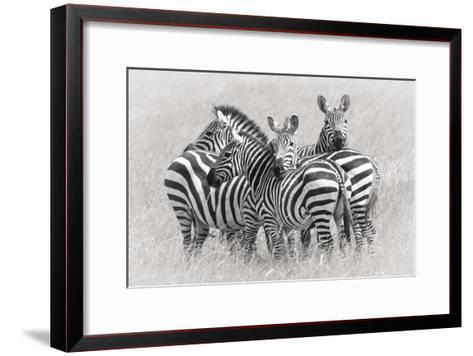 Zebras-Kirill Trubitsyn-Framed Art Print
