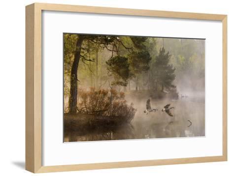 Goose Fight-Anton Van Dongen-Framed Art Print