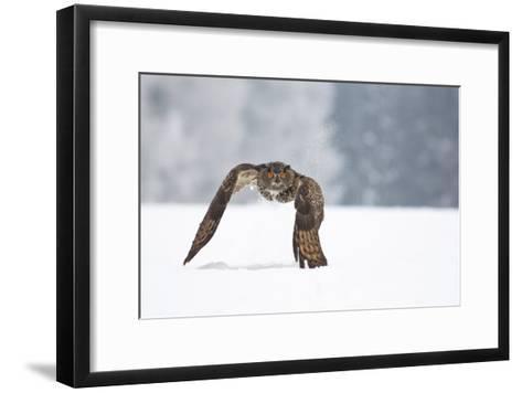 Eurasian Eagle-Owl-Milan Zygmunt-Framed Art Print