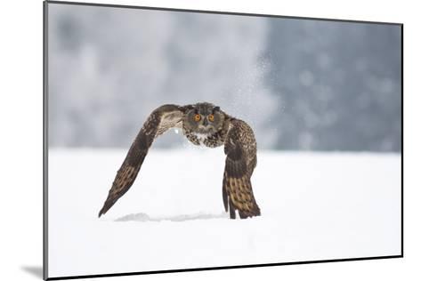 Eurasian Eagle-Owl-Milan Zygmunt-Mounted Giclee Print