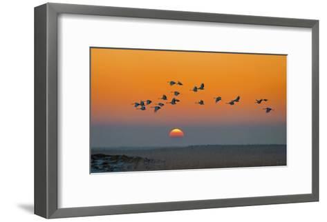 Red-Crowned Crane-Hua Zhu-Framed Art Print