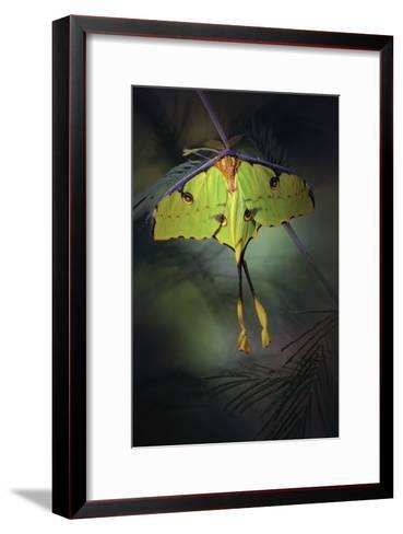 Moon Moth-Jimmy Hoffman-Framed Art Print
