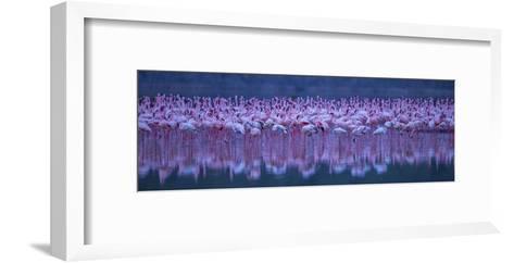 Flamingos-David Hua-Framed Art Print