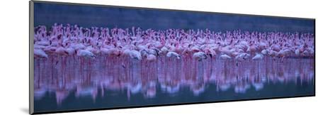 Flamingos-David Hua-Mounted Giclee Print