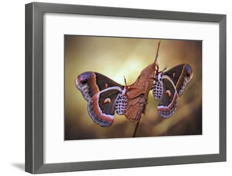 Robin Moths-Jimmy Hoffman-Framed Art Print