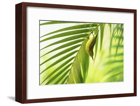 50 Shades Of Green-Daniele Bariviera-Framed Art Print