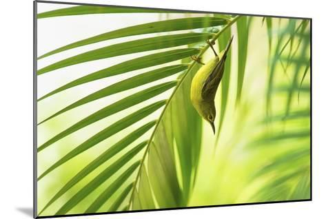 50 Shades Of Green-Daniele Bariviera-Mounted Giclee Print