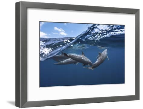 Dolphins-Barathieu Gabriel-Framed Art Print