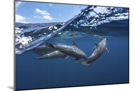 Dolphins-Barathieu Gabriel-Mounted Giclee Print