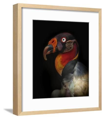 King Vulture-Sarcoramphus Papa-Ferdinando Valverde-Framed Art Print