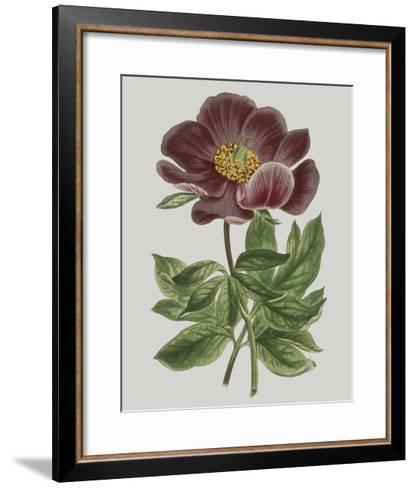 Floral Gems II-Vision Studio-Framed Art Print