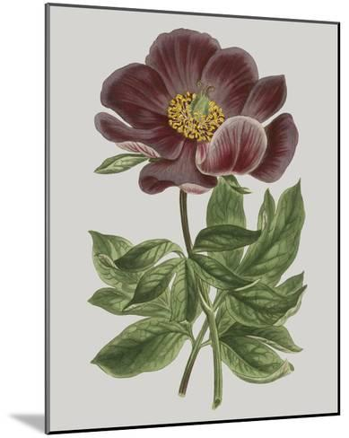 Floral Gems II-Vision Studio-Mounted Giclee Print