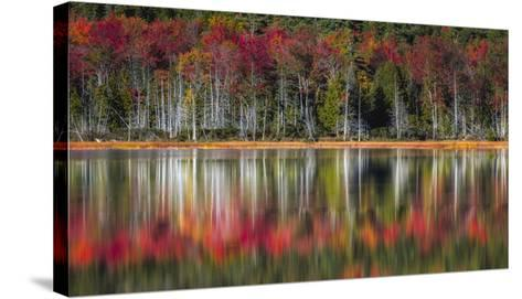 Autumn Reflections-Danny Head-Stretched Canvas Print
