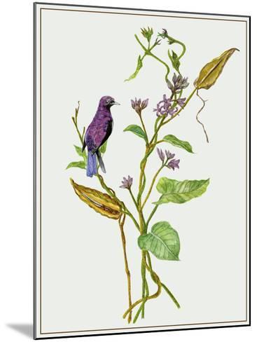 Metaplexis Japonica I-Melissa Wang-Mounted Giclee Print