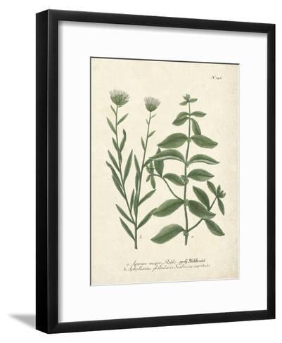 Botanica Aparine Major-The Vintage Collection-Framed Art Print