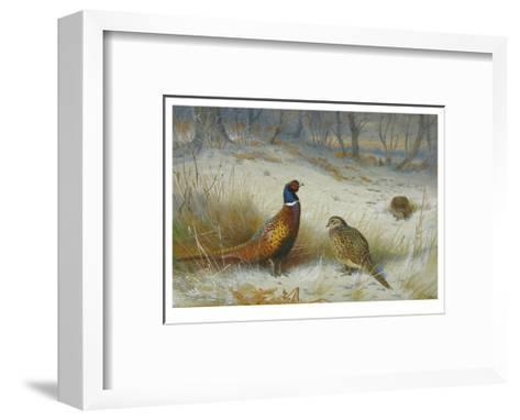Pheasant in Winter-Archibald Thorburn-Framed Art Print