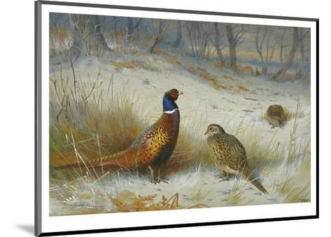 Pheasant in Winter-Archibald Thorburn-Mounted Premium Giclee Print