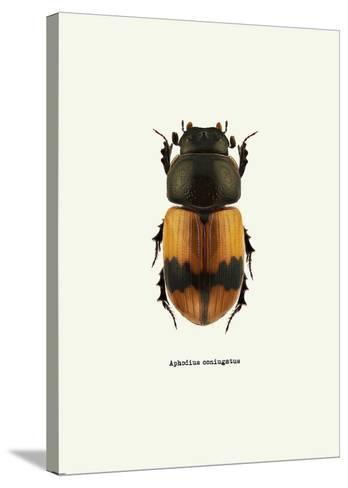 Beetle Orange-GraphINC-Stretched Canvas Print