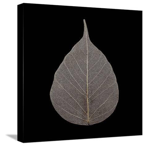 Brown Leaf-PhotoINC Studio-Stretched Canvas Print