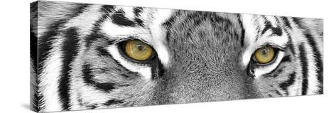Tiger-PhotoINC Studio-Stretched Canvas Print