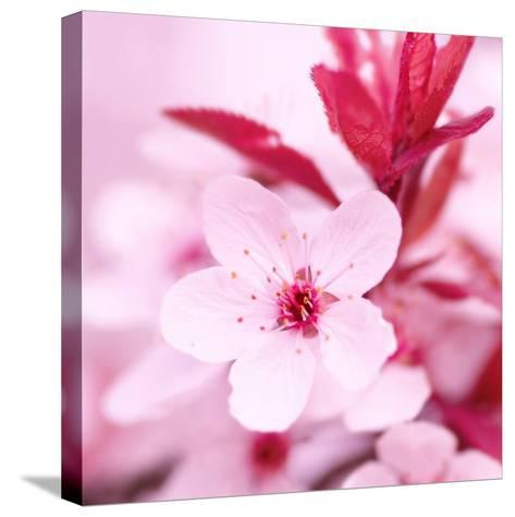 Pink Blossom-PhotoINC Studio-Stretched Canvas Print