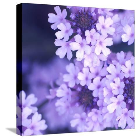 Purple Flowers-PhotoINC Studio-Stretched Canvas Print