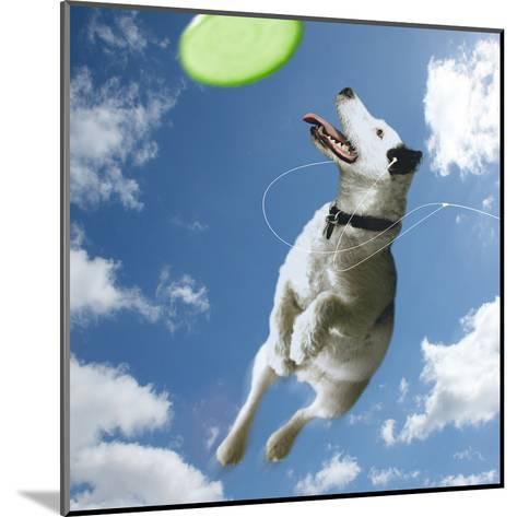 Pup Diva-Noah Bay-Mounted Art Print