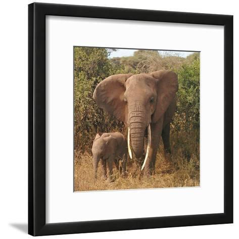 Elephant Family-Wonderful Dream-Framed Art Print