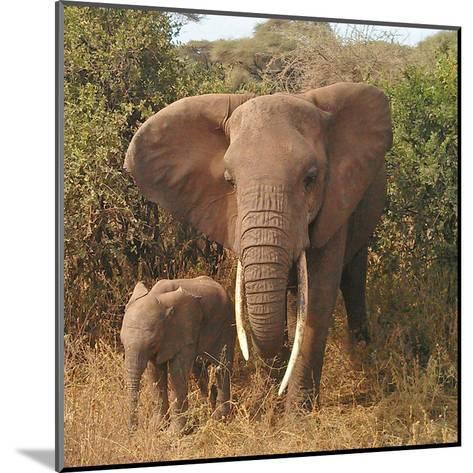 Elephant Family-Wonderful Dream-Mounted Art Print