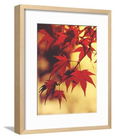 Autum Colorful Leaves Maple-Grab My Art-Framed Art Print
