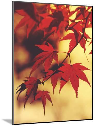 Autum Colorful Leaves Maple-Grab My Art-Mounted Art Print