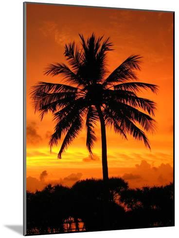 Sunrise with Palm Tree-Wonderful Dream-Mounted Art Print