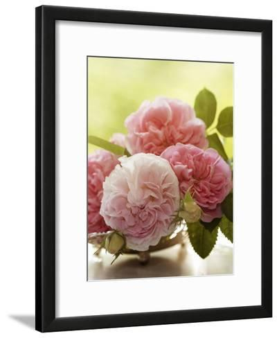 Shabby Roses Flower Floral Vintage 2-Grab My Art-Framed Art Print
