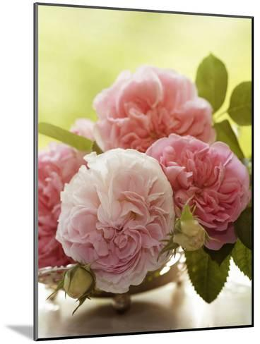 Shabby Roses Flower Floral Vintage 2-Grab My Art-Mounted Art Print
