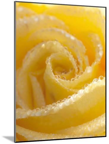 Yellow Rose Flower Floral Waterdrops-Grab My Art-Mounted Art Print