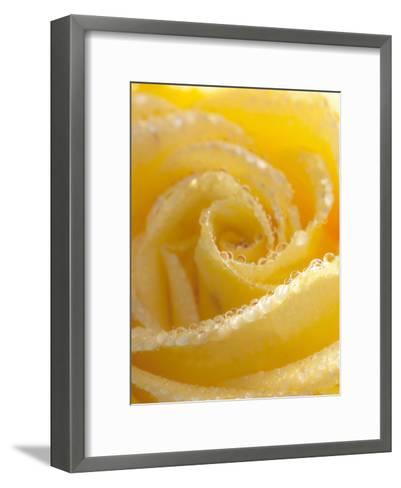 Yellow Rose Flower Floral Waterdrops-Grab My Art-Framed Art Print