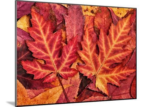 Autumn Leaf-Grab My Art-Mounted Art Print