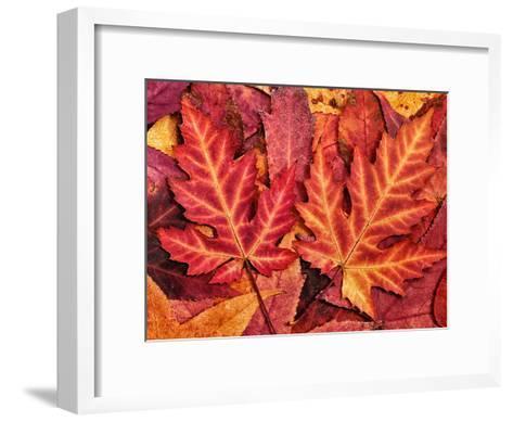 Autumn Leaf-Grab My Art-Framed Art Print