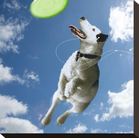 Pup Diva-Noah Bay-Stretched Canvas Print