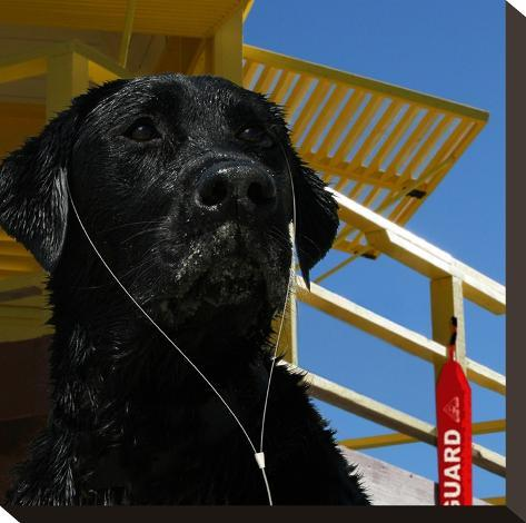 The Dog Of The Bay-Noah Bay-Stretched Canvas Print