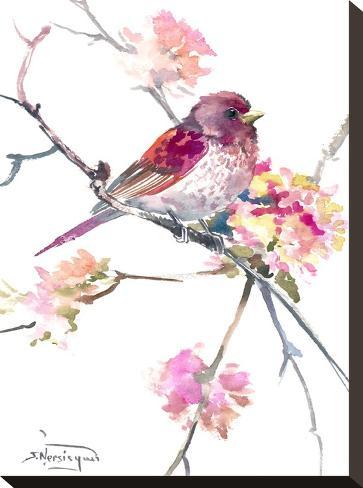 Rosefinch-Suren Nersisyan-Stretched Canvas Print