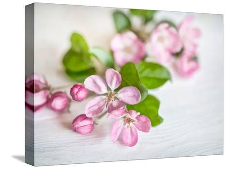 Apple Blossom 2-Lebens Art-Stretched Canvas Print