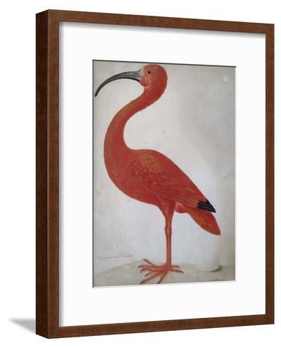 Scarlet Ibis with an Egg, 1699 - 1700-Maria Merian-Framed Art Print